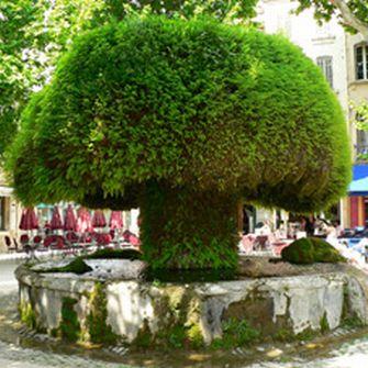 salon_de_provence